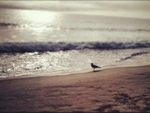 bird_beach