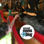 Santa's Village: A Christmas Adventure in the Summer!