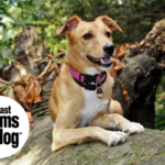 Dog-Friendly Spaces (For Your Four-Legged Kids)