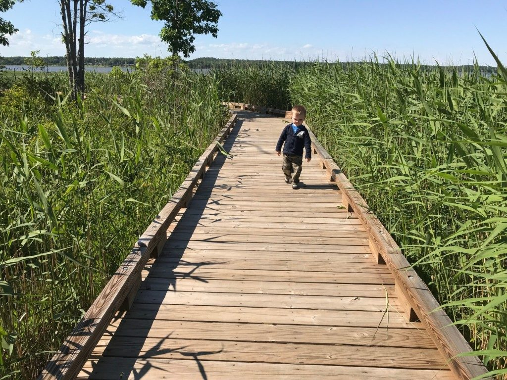 Toddler-Friendly Seacoast Nature Walks - Great Bay Discovery Center