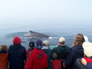 Whale Watching at Teen Summer Camp