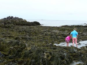 children tide pooling in Maine