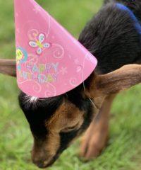 Legacy Lane Farm - Seacoast Birthday Party Venue
