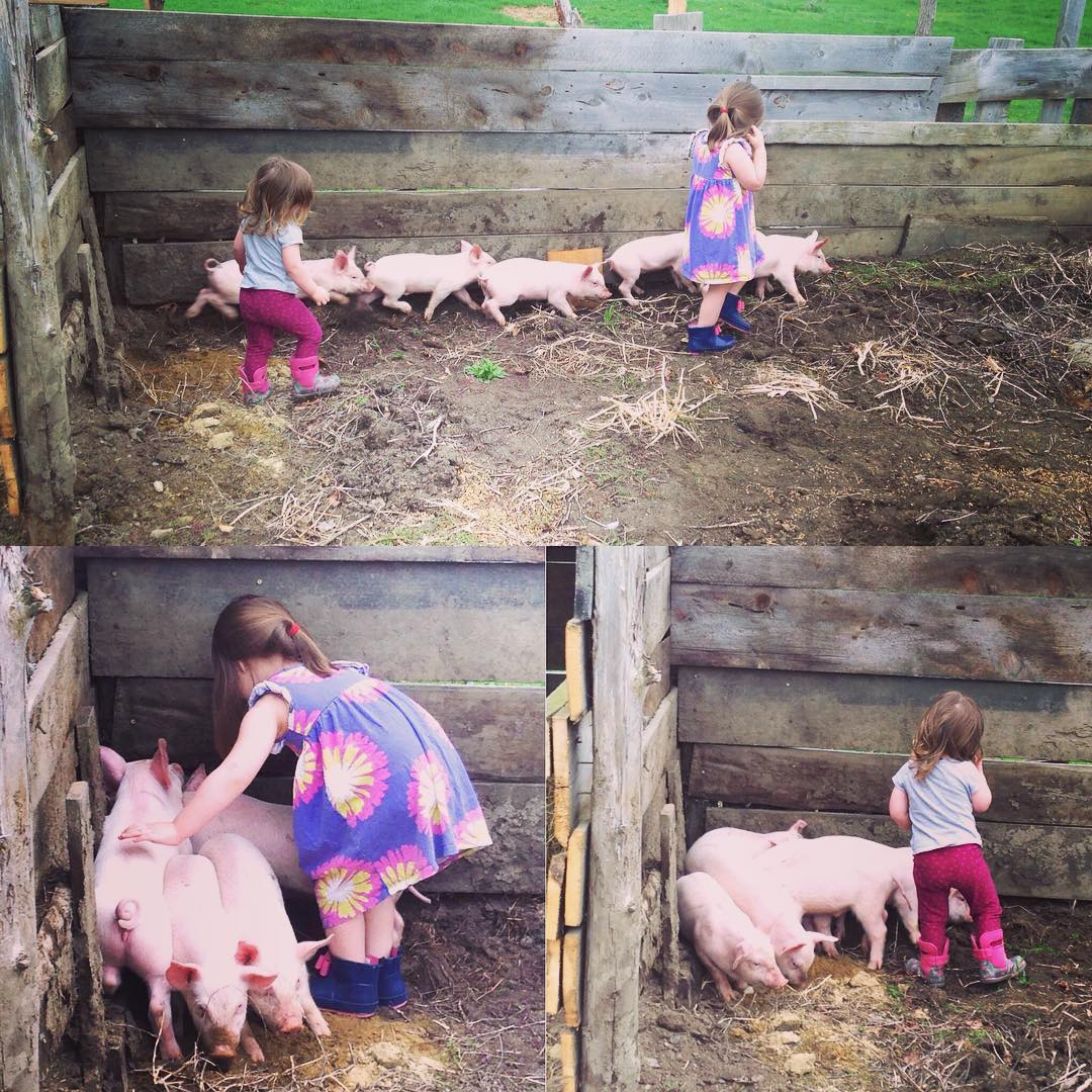 pigs are just a few of the animals my kids get to know on the farm
