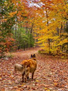 dog on Seacoast hike